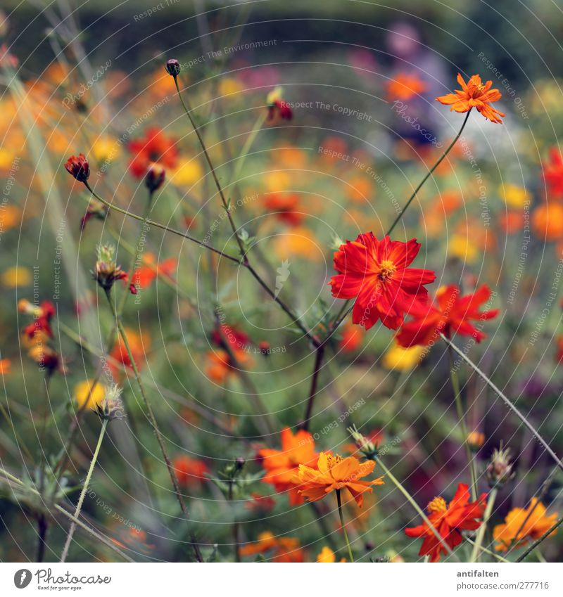 Orange flowers Nature Plant Summer Beautiful weather Flower Leaf Blossom Wild plant Garden Park Going Fragrance Multicoloured Yellow Green Joy Happiness