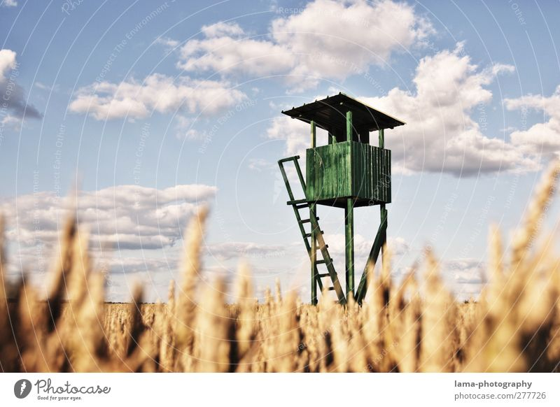 Green Clouds Field Beautiful weather Agriculture Hunting Harvest Wheat Forestry Hunter Hunting Blind Wheatfield Wheat ear