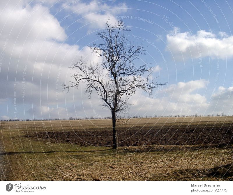 Sky Old Tree Clouds Loneliness Horizon Brown Pasture April March February