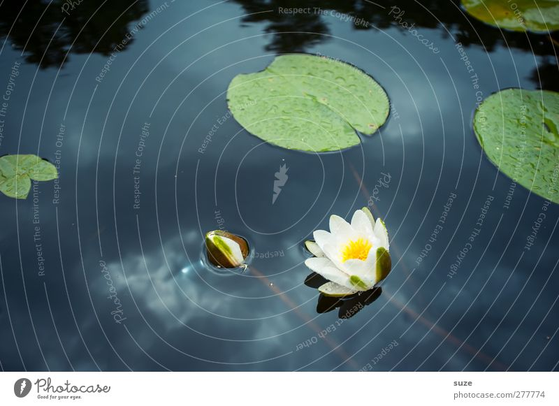 Nature Blue Water White Beautiful Plant Leaf Calm Environment Cold Blossom Lake Lifestyle Elements Round Wellness