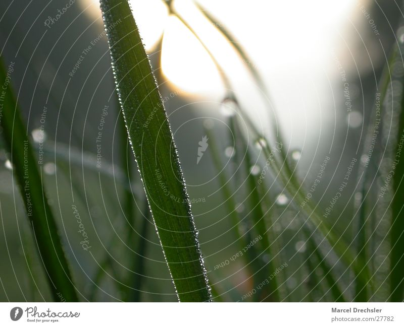 morning dew Green Grass Fresh Pure Clean Cold Blade of grass Dew Water Morning Clarity Drops of water