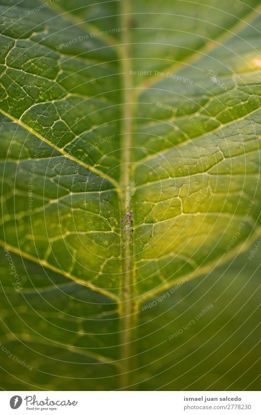 green leaf texture Nature Summer Plant Green Leaf Winter Autumn Garden Decoration Fresh Beauty Photography Consistency Floral