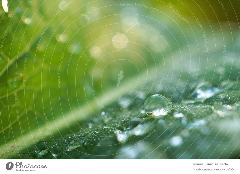 drops on the green leaves Plant Leaf Drop raindrop Glittering Bright Green Garden Floral Nature Abstract Consistency Fresh Exterior shot background