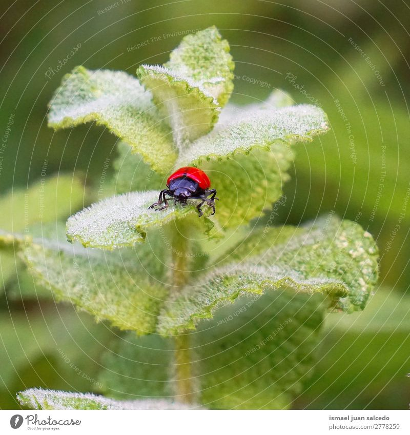red bug on the plant Bug Red Insect Wing Animal Plant Flower Garden Nature Exterior shot background Beauty Photography fragility Elegant Leaf Green