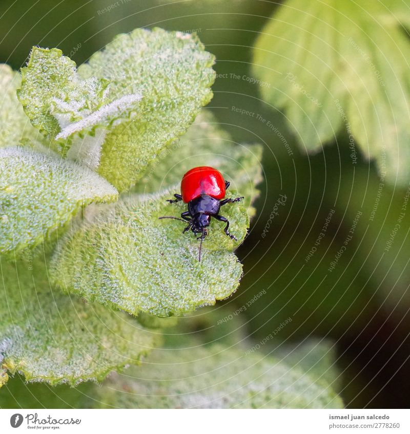 red bug on the leaves Bug Red Insect Wing Animal Plant Flower Garden Nature Exterior shot background Beauty Photography fragility Elegant