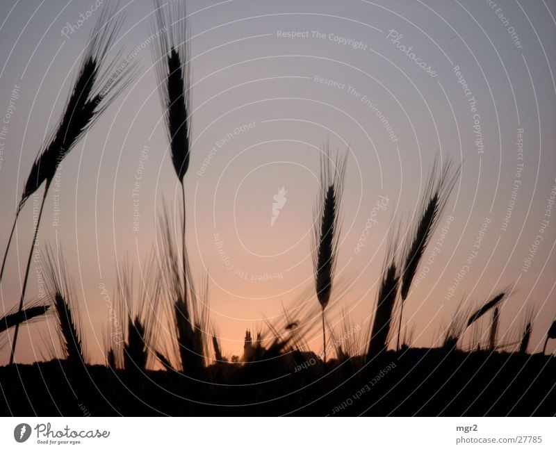 sunset Sunset Field Dusk Moody Dark Grain Evening Sky