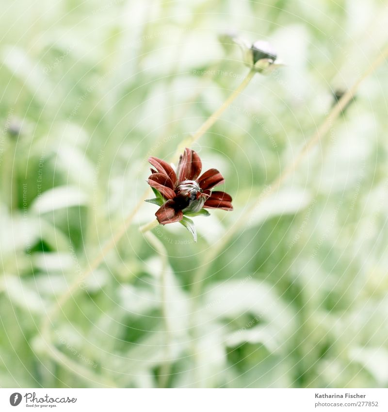 Wild flower Environment Nature Landscape Plant Flower Grass Bushes Blossom Foliage plant Wild plant Exotic Garden Park Meadow Brown Yellow Green Red White