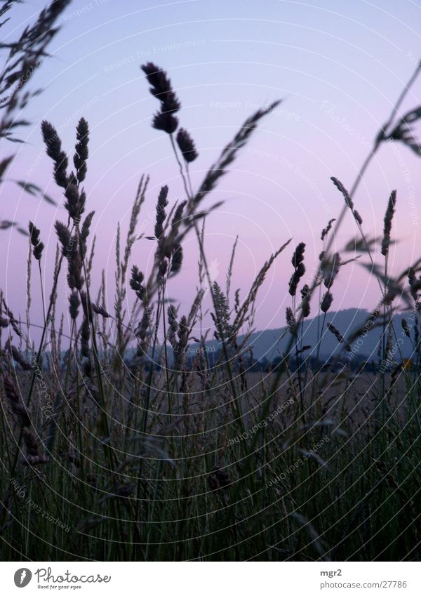 Sky Meadow Grass Moody Field Dusk
