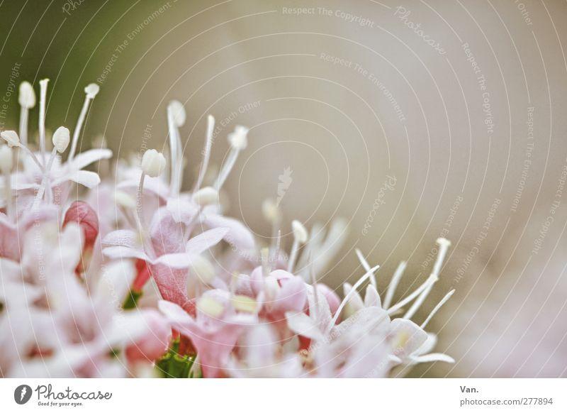 Nature Plant Flower Blossom Garden Pink Fresh Calyx