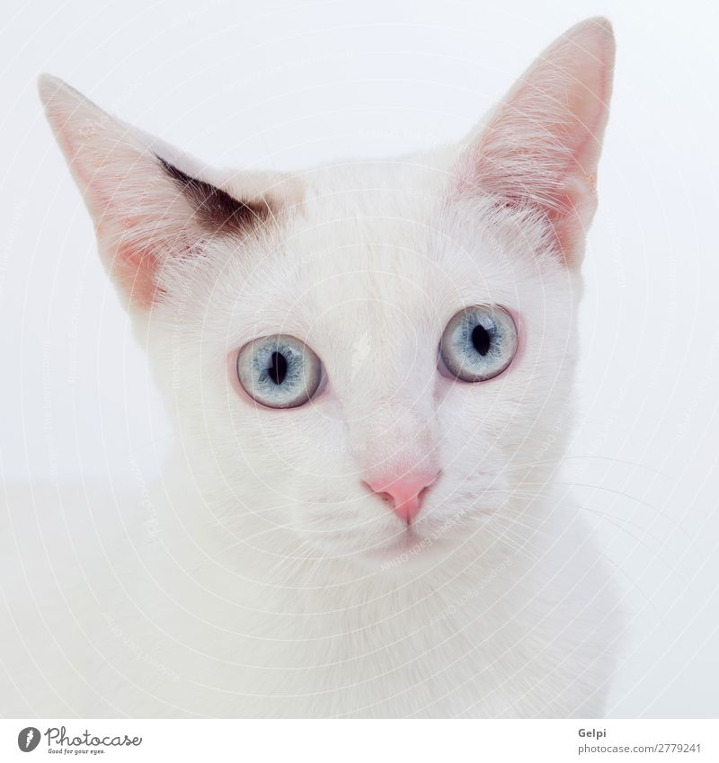 Beautiful white cat Cat Nature Blue White Animal Joy Funny Sit Cute Soft Beauty Photography Domestic cat Pet Mammal Delightful