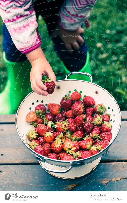 Kid taking a fresh strawberry from bowl Fruit Vegetarian diet Bowl Summer Table Woman Adults Hand Nature Wood Fresh Delicious Natural Juicy Red food freshly