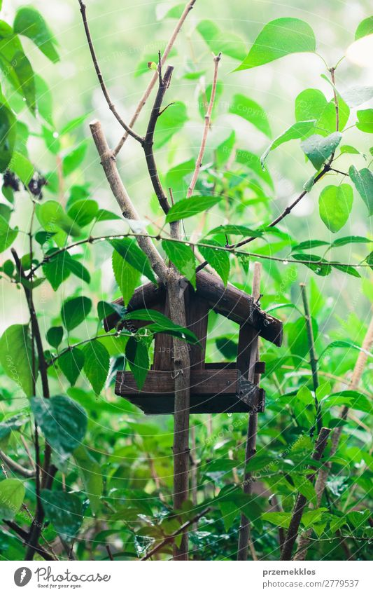 Bird house on a tree among the green leaves Save Life Summer House (Residential Structure) Nature Plant Animal Tree Leaf Park Forest Wood Natural Wild Green