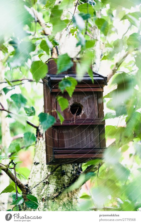 Bird house on a tree among the green leaves in springtime. Save Life Summer House (Residential Structure) Nature Plant Animal Tree Leaf Park Forest Wood Natural