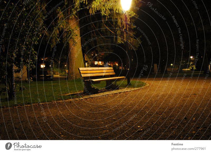 under the lantern Environment Tree Park Deserted Places Lanes & trails Natural Colour photo Exterior shot Night Long exposure Park bench Footpath