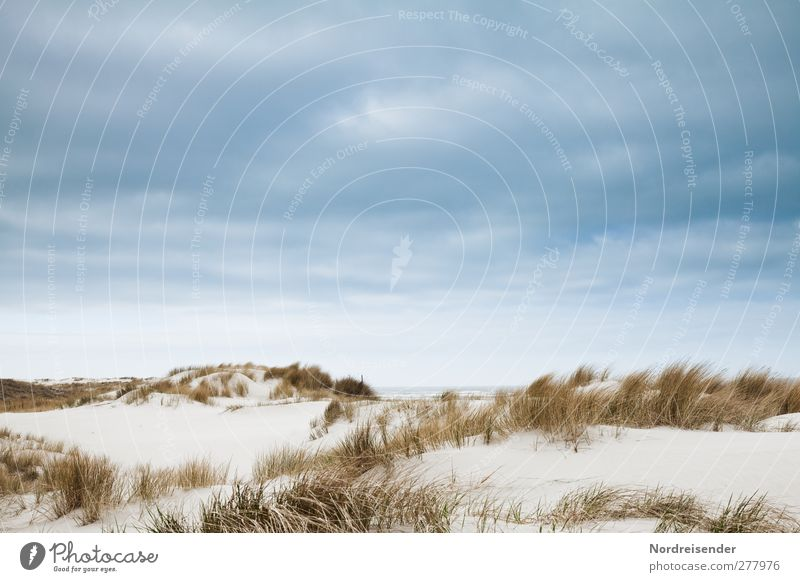 Sky Nature Blue Vacation & Travel Summer Plant Ocean Beach Loneliness Calm Relaxation Landscape Coast Sand Moody Brown