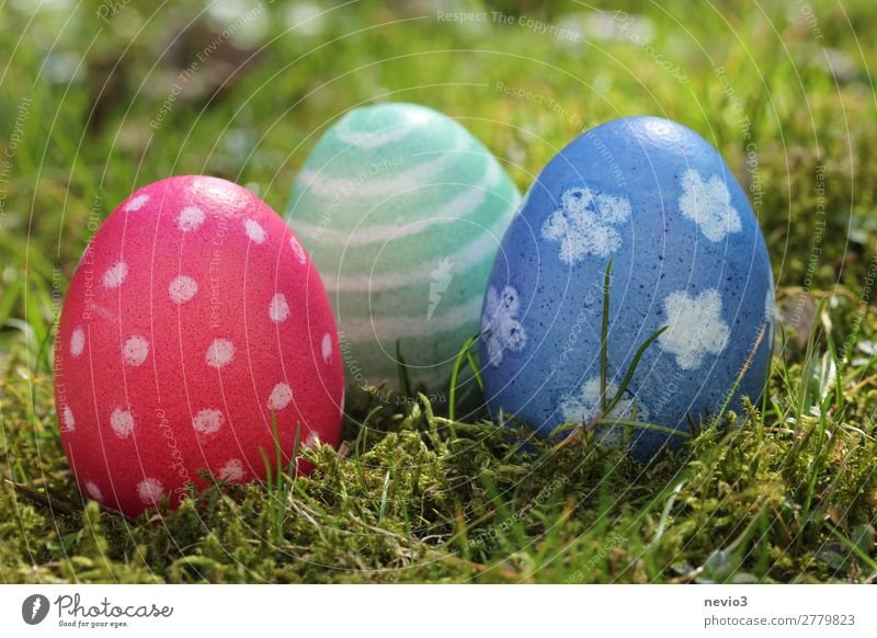 Easter egg hunt Nature Blue Multicoloured Green Red Spring fever Public Holiday Religion and faith Vacation & Travel Desire Happiness Easter egg nest