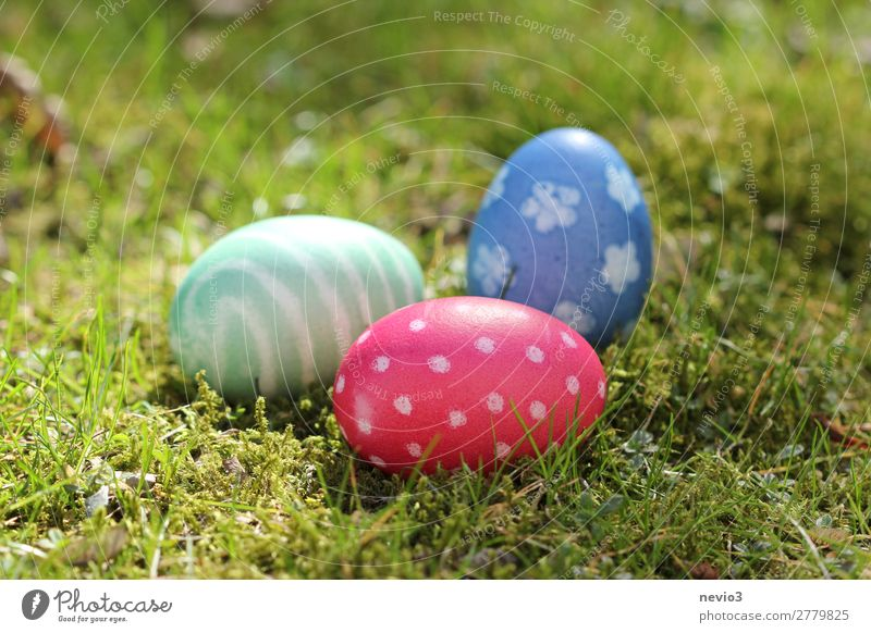 Easter egg hunt Nature Round Blue Multicoloured Green Red Pattern Egg Natural color Search Find Public Holiday Feasts & Celebrations Easter egg nest Spotted