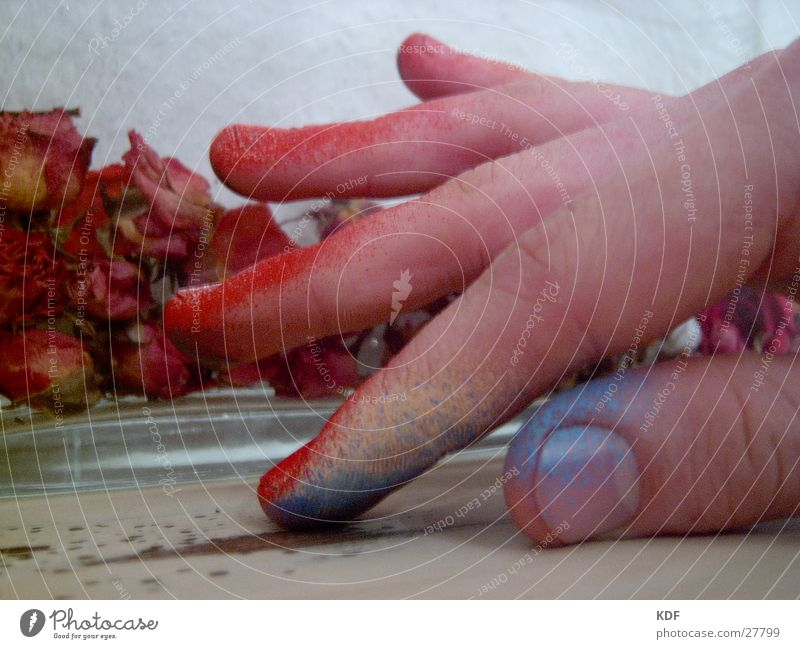 Human being Hand Blue Red Yellow Colour Fingers Rose