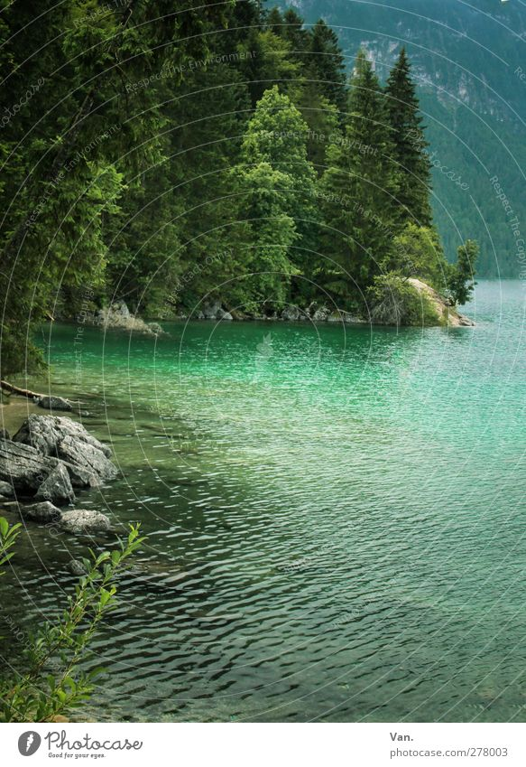 Eibsee Nature Landscape Water Plant Tree Forest Rock Lakeside Eib Lake Stone Wet Green Turquoise Colour photo Exterior shot Deserted Day Light