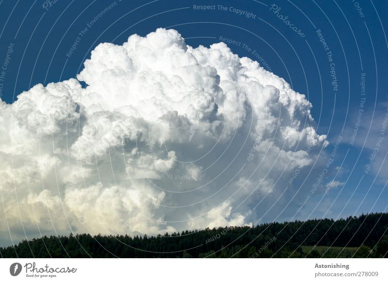 massive cloud Environment Nature Landscape Air Sky Clouds Storm clouds Horizon Summer Weather Plant Tree Forest Aggression Dark Hot Blue White Might Dynamics