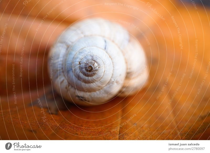 snail on the leaf Animal Bug White Insect Small Shell Spiral Nature Plant Garden Exterior shot fragility Cute Beauty Photography Loneliness