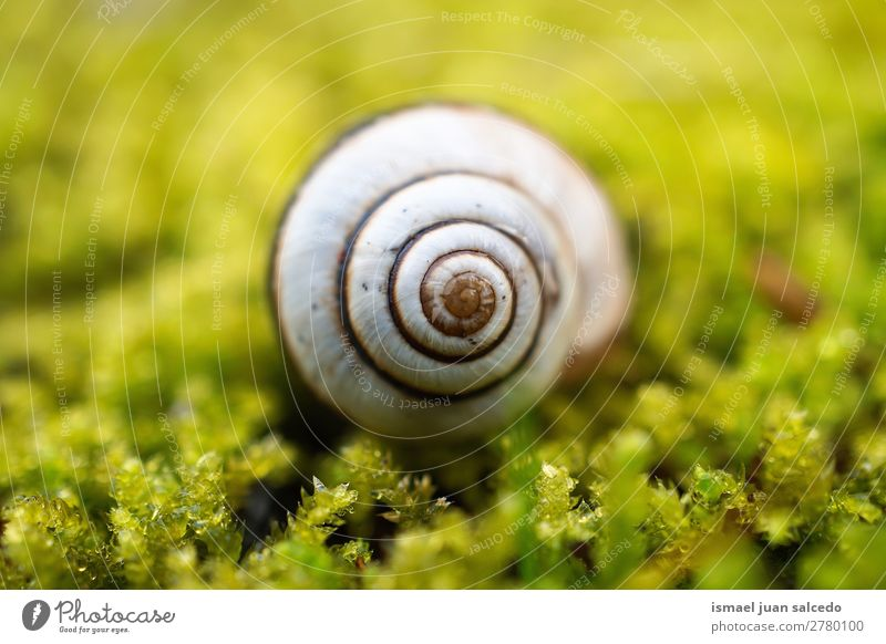 snail in the nature Animal Bug White Insect Small Shell Spiral Nature Plant Garden Exterior shot fragility Cute Beauty Photography Loneliness