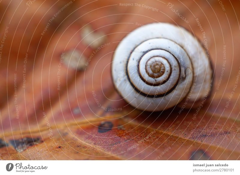 snail in the leaf Animal Bug White Insect Small Shell Spiral Nature Plant Garden Exterior shot fragility Cute Beauty Photography Loneliness