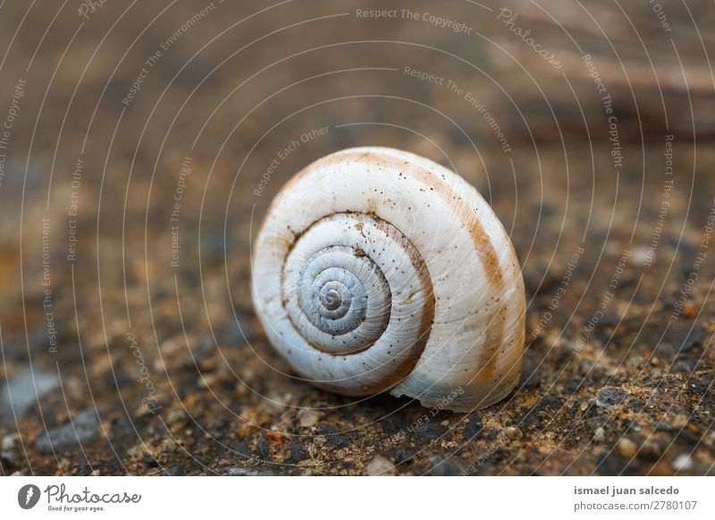 sanil in the nature snail Animal Bug White Insect Small Shell Spiral Nature Plant Garden Exterior shot fragility Cute Beauty Photography Loneliness