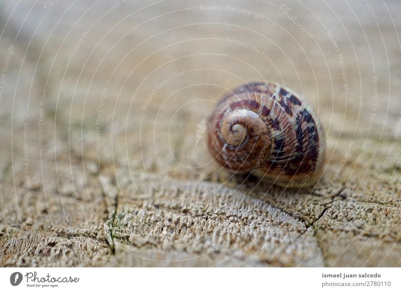 snail in the nature Nature Plant Animal Loneliness Small Garden Brown Cute Beauty Photography Insect Spiral Shell Bug
