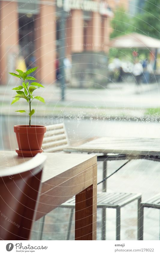 inside it's dry [B] Plant Foliage plant Pot plant Village Town Window Table Chair Natural Green Rain Within Colour photo Interior shot Deserted Day
