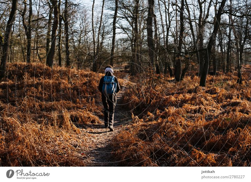 Hike through fern and forest Hiking Human being Back 1 Environment Nature Landscape Tree Fern Forest Breathe Relaxation Going To enjoy Free Healthy Natural