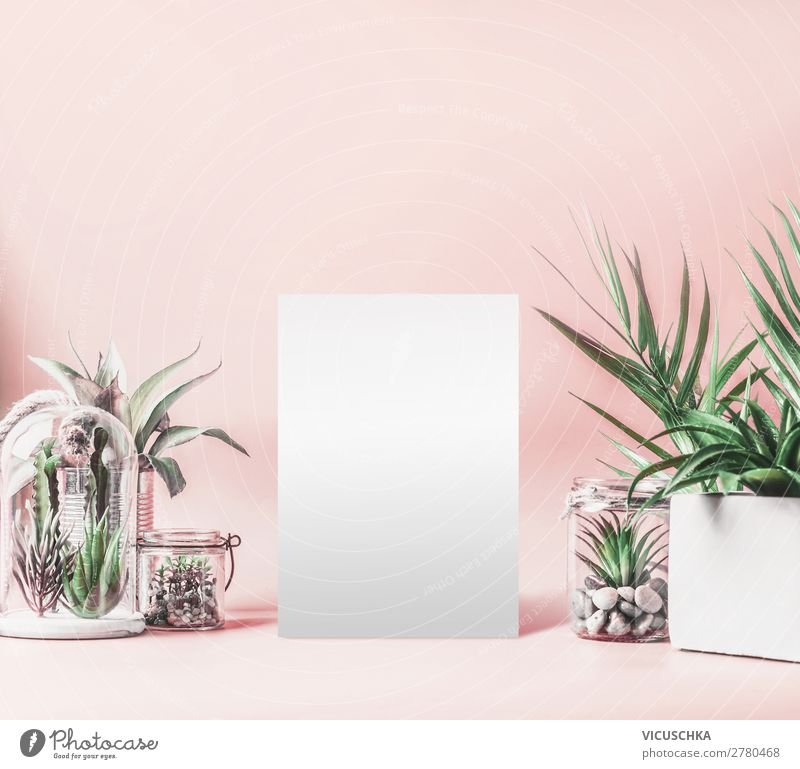 House plants background with mock up Shopping Design Living or residing Interior design Decoration Table Plant Pot plant Exotic Wall (barrier) Wall (building)