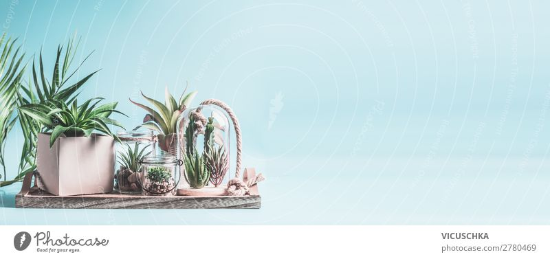 Home succulent garden. Green house plants in pots, glass terrarium and jars on table at pastel pink background. Various succulent and cactus plants in glass bowls. Modern indoor plants concept, banner