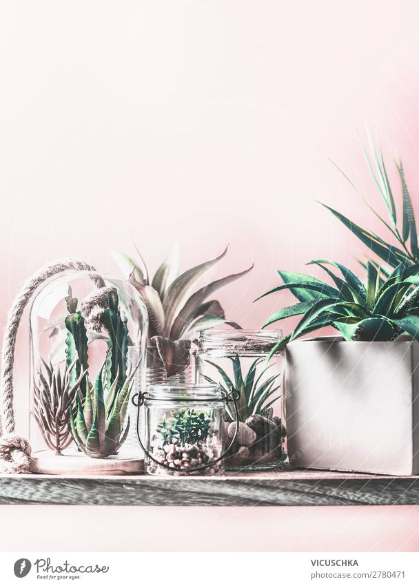Houseplants in pots and in glass Terrarium Shopping Design Exotic Leisure and hobbies Living or residing Flat (apartment) Nature Plant Cactus Pot plant Garden
