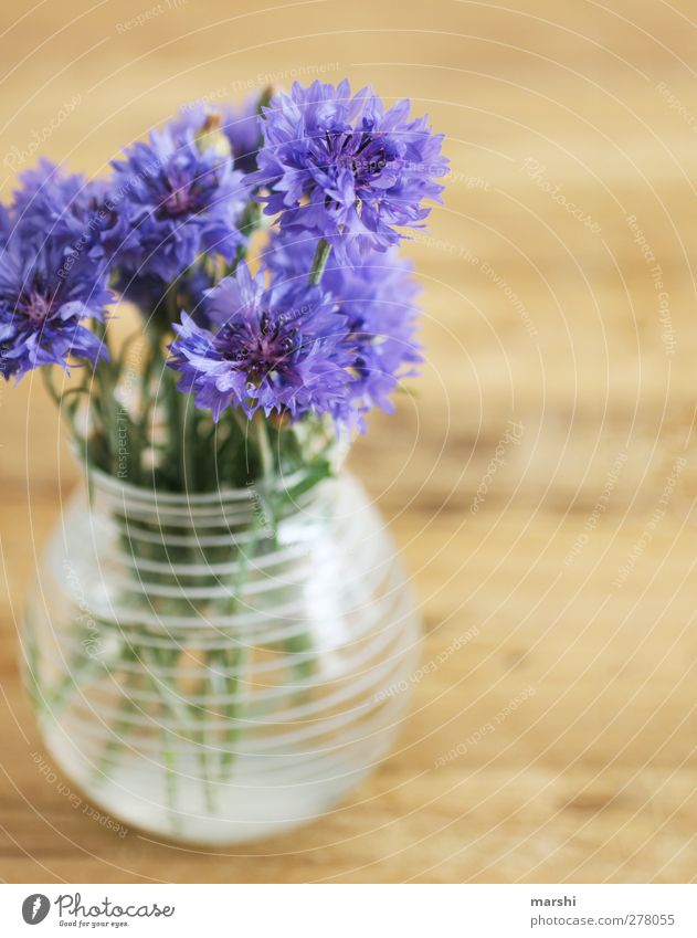 Blue Beautiful Summer Plant Flower Decoration Violet Blossoming Bouquet Vase Cornflower