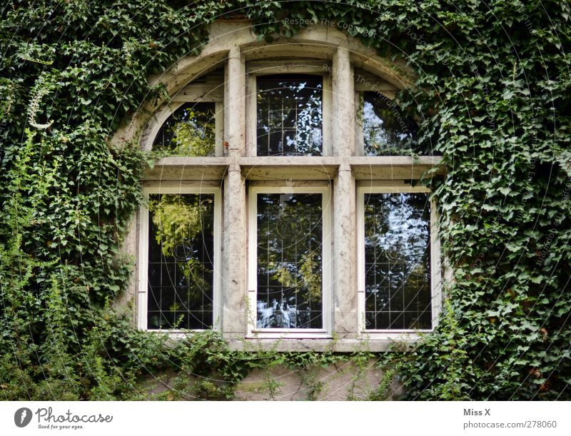 Sleeping Beauty Plant Bushes Leaf House (Residential Structure) Church Castle Facade Window Growth Old Green Decline Fairytale castle Ivy Tendril Colour photo