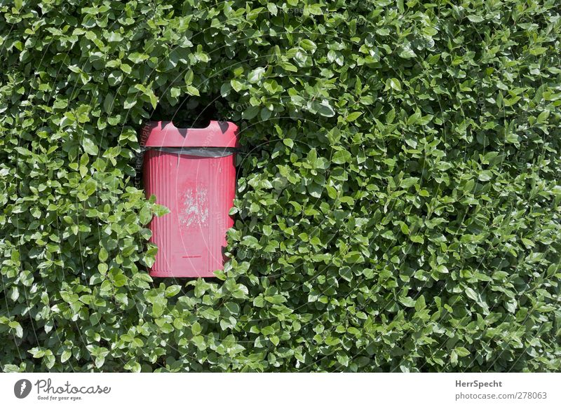 garbage chutes Plant Bushes Foliage plant Plastic Growth Threat Green Red Trash container Waste management Hedge swallow become overgrown Devour Colour photo