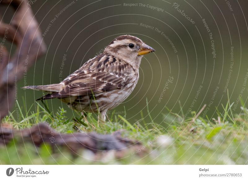 Beautiful wild bird Life Woman Adults Environment Nature Animal Flower Bird Small Natural Wild Brown Yellow Red White sparrow wildlife common perched background