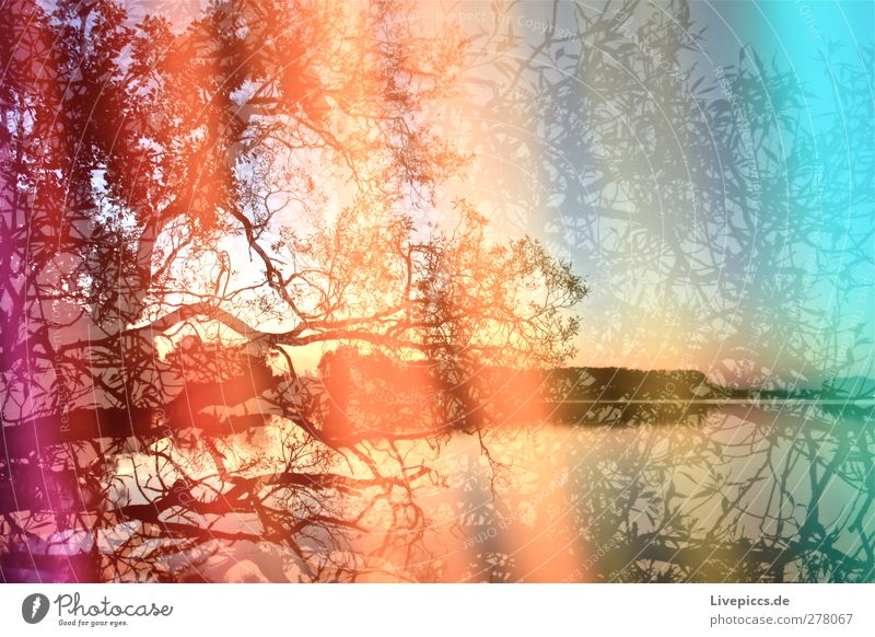 Colours of the Müritz Art Painter Environment Nature Landscape Water Sky Cloudless sky Sunrise Sunset Sunlight Summer Beautiful weather Plant Tree Leaf
