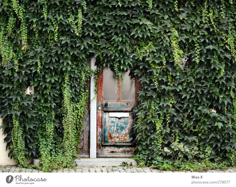 proliferation Plant Bushes Leaf House (Residential Structure) Wall (barrier) Wall (building) Door Name plate Mailbox Growth Old Decline Wooden door