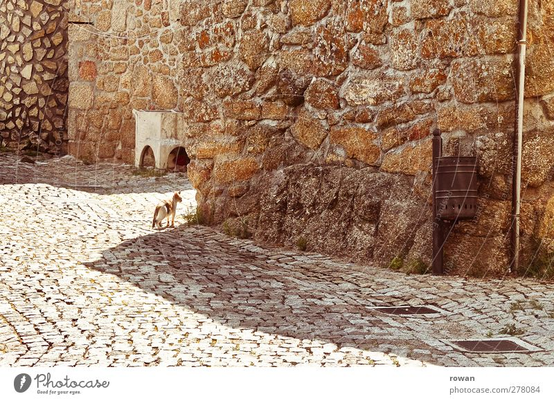 Cat Loneliness Animal Calm Street Wall (building) Warmth Lanes & trails Architecture Wall (barrier) Building Stone Brown Facade Empty Village