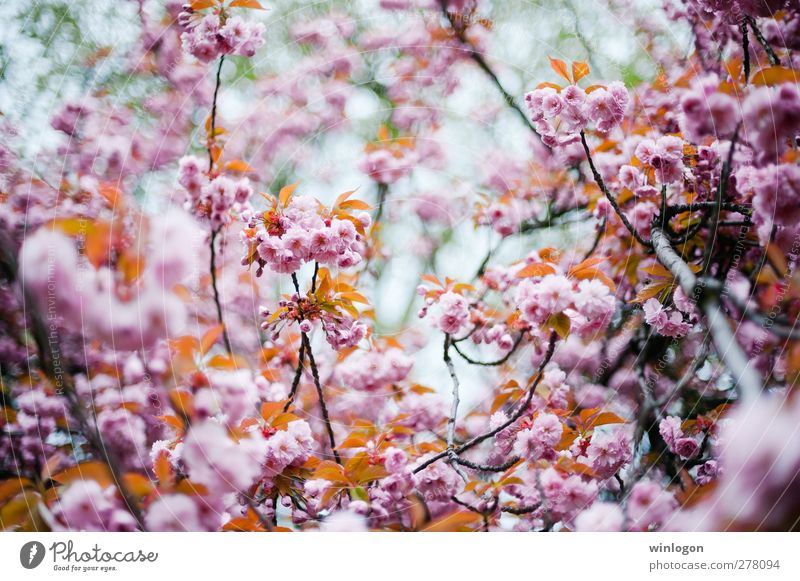 Nature Vacation & Travel Summer Tree Plant Flower Forest Spring Blossom Think Dream Art Park Growth Europe Beautiful weather