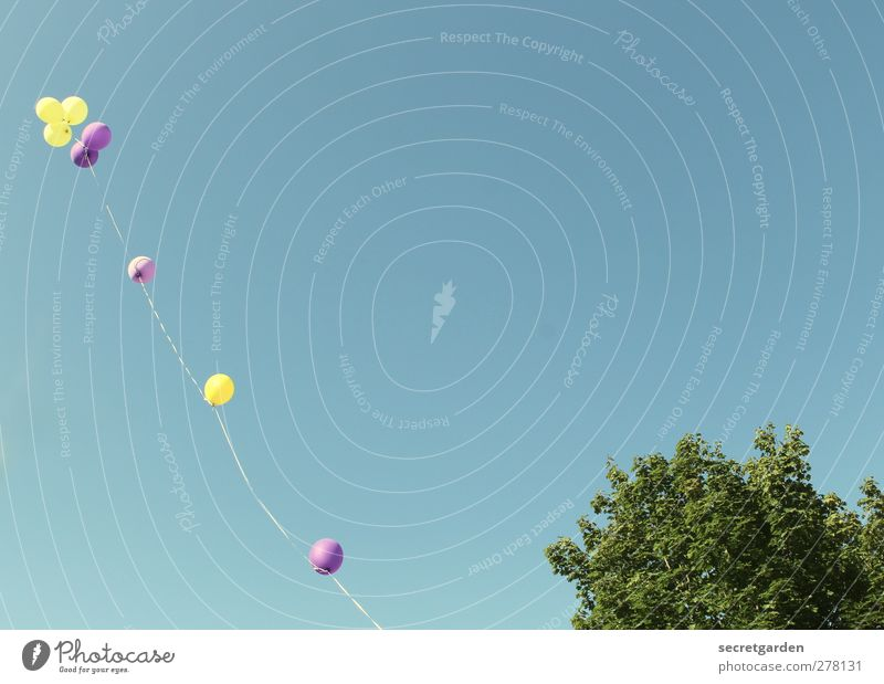 Nature Blue Green Summer Tree Yellow Freedom Party Bright Flying Birthday Tall Decoration Beautiful weather Balloon Shows