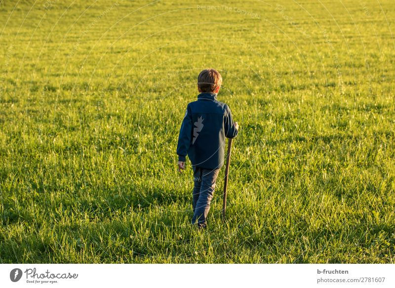 Child on a meadow, autumn, evening light Well-being Contentment Vacation & Travel Sun Hiking Boy (child) 1 Human being 3 - 8 years Infancy Autumn Grass Meadow