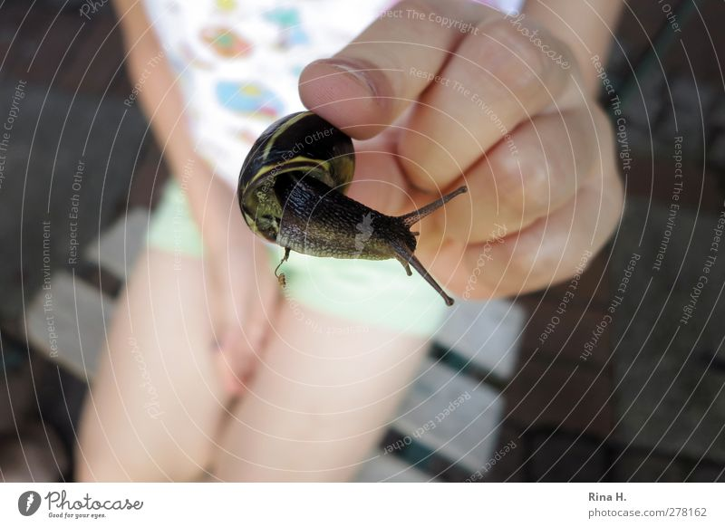Look how cute she is! Child 1 Human being 3 - 8 years Infancy Summer Snail Animal To hold on Joie de vivre (Vitality) Hand Fingers Snail shell Caution Indicate