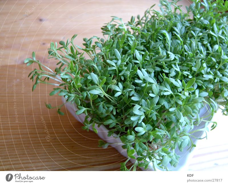 Green Plant Leaf Nutrition Wood Healthy Food Fresh Vegetable Ecological Organic produce Organic farming Shoot Germ Agriculture Biological