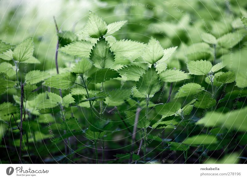 Nature Green Plant Leaf Natural Esthetic Foliage plant Wild plant