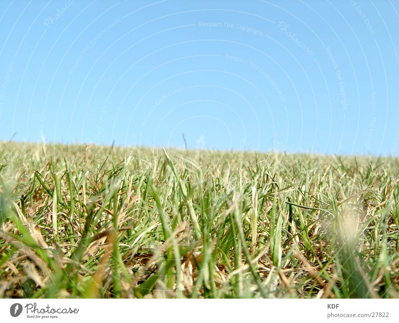 Beautiful Green Blue Summer Meadow Grass Warmth Horizon Happiness Lawn Grass surface Physics Hill Boredom Blade of grass Beautiful weather