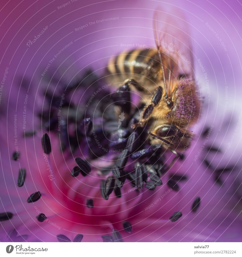 Nature Summer Plant Animal Environment Blossom Spring Garden Blossoming Violet Insect Bee Fragrance Pollen Working man Farm animal