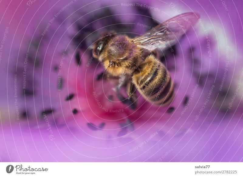 Nature Summer Plant Flower Animal Environment Blossom Spring Garden Work and employment Blossoming Delicious Violet Insect Collection Bee